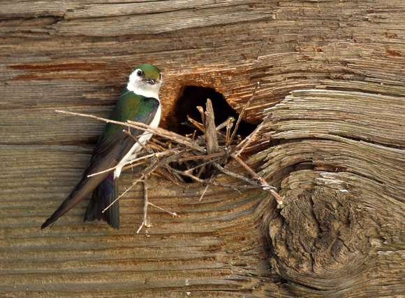 Rustic nest site